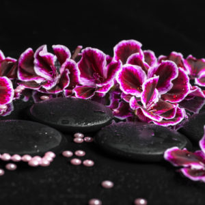 Beautiful spa concept of geranium flower, beads ad black zen stones with drops in reflection water, closeup, body to body massage, tantric, erotic, hotel visit, massage in Moscow expat, Massage in Moscow hotel